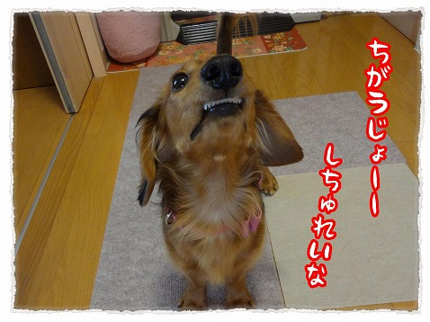 2013_2_3_2.jpg
