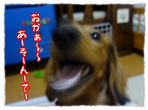 2013_2_4_1.jpg