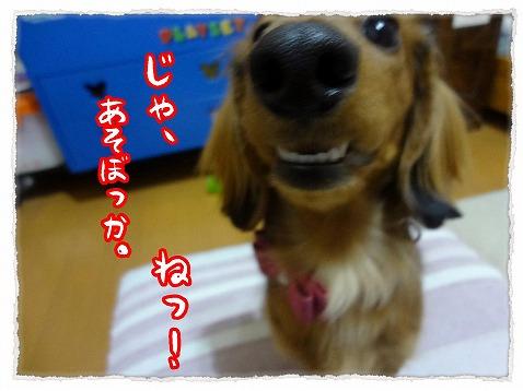 2013_2_4_3.jpg