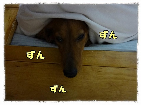 2013_2_9_3.jpg