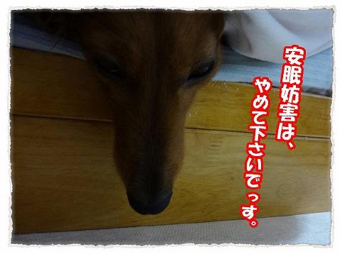 2013_2_9_4.jpg