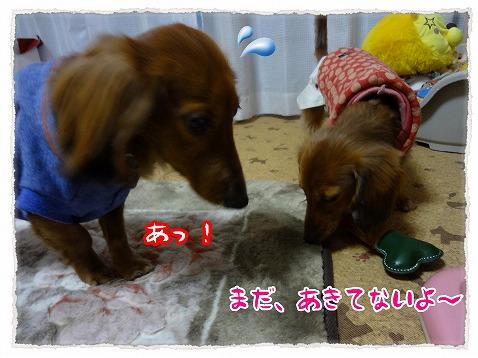 2013_3_13_6.jpg