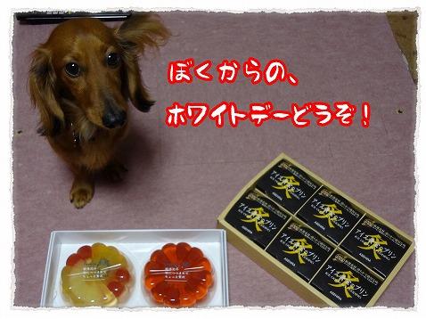 2013_3_15_1.jpg
