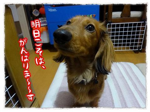 2013_3_16_3.jpg