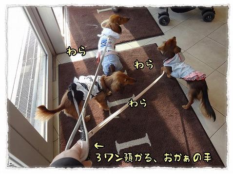 2013_3_17_3.jpg