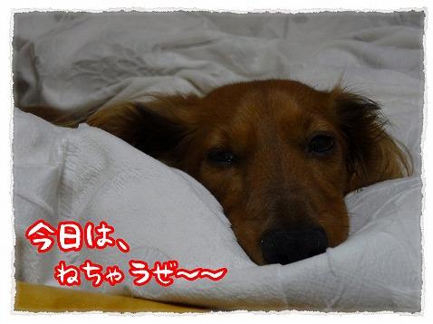 2013_3_18_1.jpg