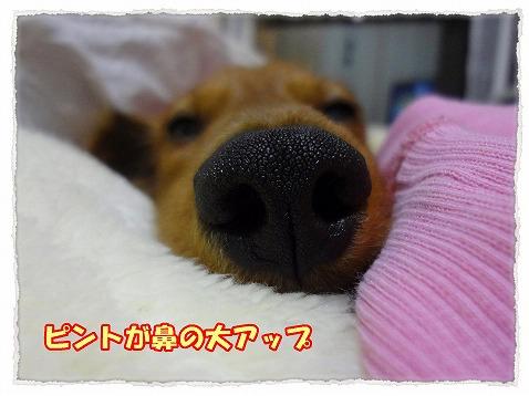 2013_3_1_2.jpg