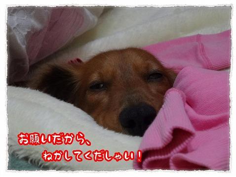 2013_3_1_5.jpg