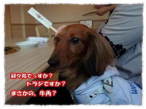 2013_3_20_1.jpg