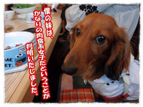 2013_3_20_5.jpg