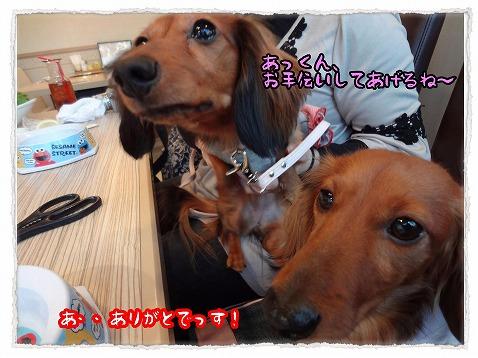 2013_3_20_6.jpg