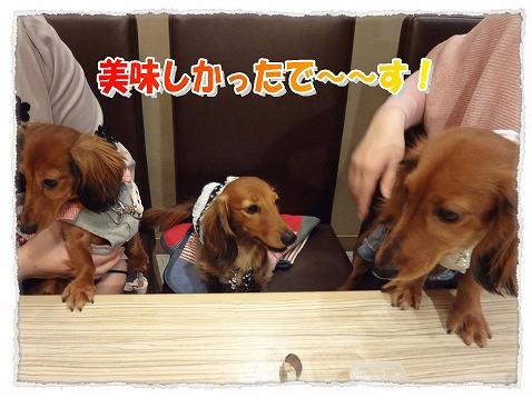 2013_3_20_8.jpg
