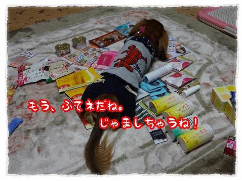 2013_3_23_6.jpg