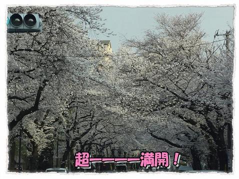 2013_3_24_5.jpg