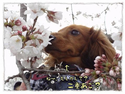 2013_3_25_2.jpg