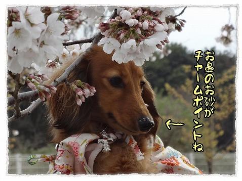2013_3_25_3.jpg
