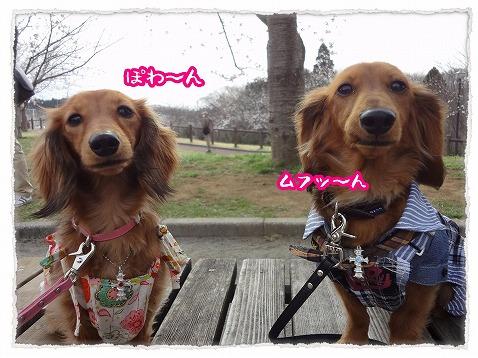 2013_3_25_4.jpg