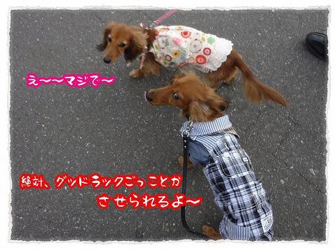 2013_3_27_1.jpg