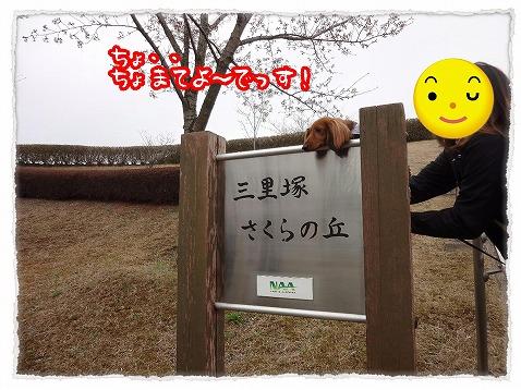 2013_3_27_8.jpg