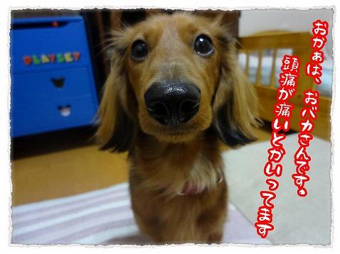2013_3_5_1.jpg