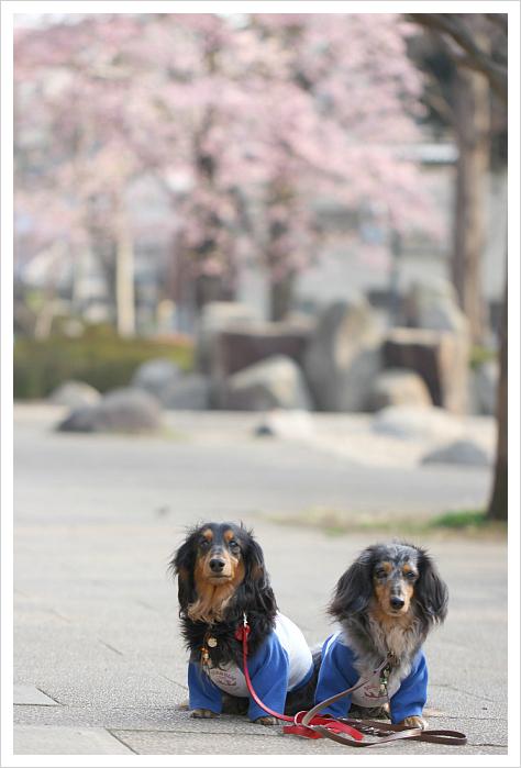 2013-03-19-23.jpg