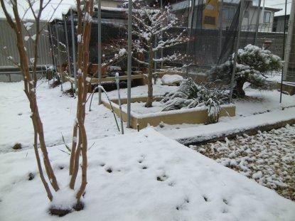 庭・園芸畑の雪at08日700頃