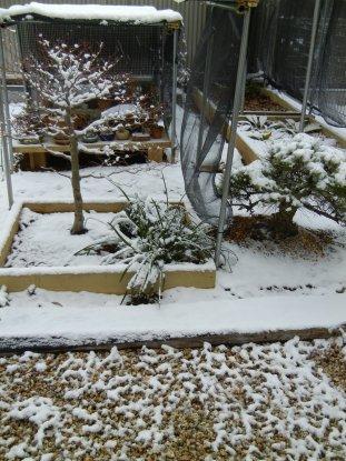 園芸畑の雪at08日700頃