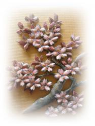 桜シャドー