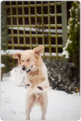 雪ヘイミッシュ3