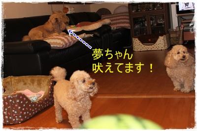 2012_0531_190658-IMG_7145.jpg