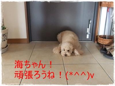 2012_0604_091702-DSCF6041.jpg