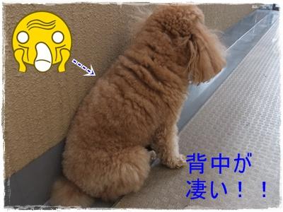 2012_0604_121013-DSCF6048.jpg