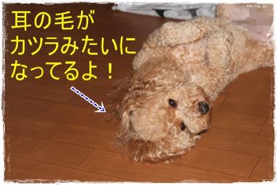 2012_0617_113906-IMG_7300.jpg