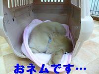凛太郎2-21-12