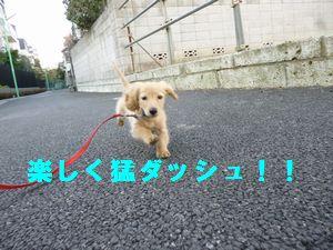 凛太郎2-28-11