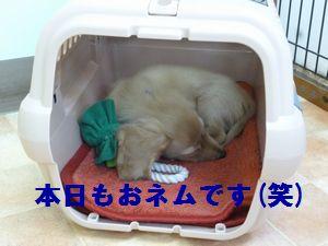 凛太郎2-28-15