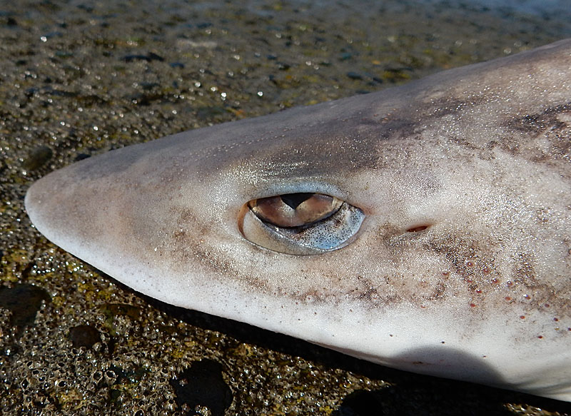 140913サメの眼2