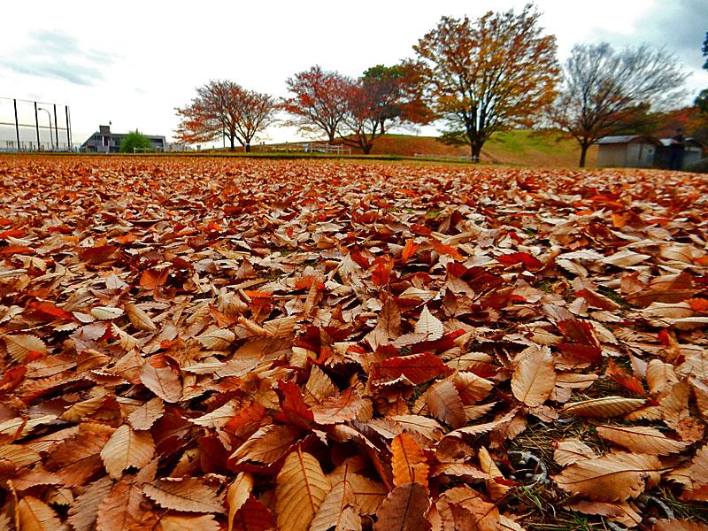 141203枯葉の季節1