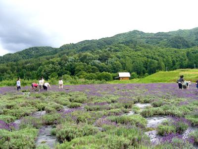 ラベンダー畑2