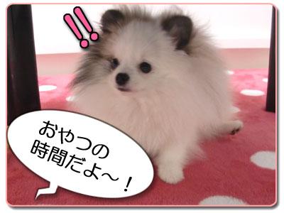★シャーベットでちゅ★A