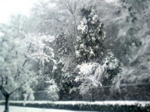snow2_convert_20130114231433.jpg