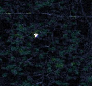 山梨の森の精霊2
