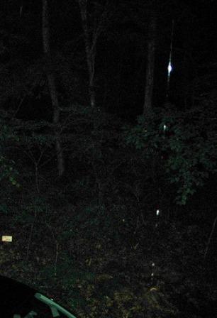 山梨の森の精霊きのこ