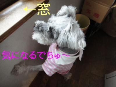 DSC02810_convert_20120526175337.jpg