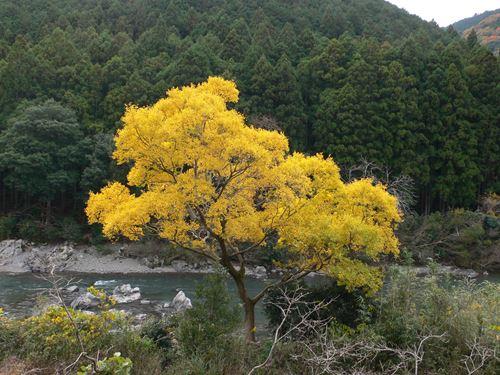 aritagawa113001_R.jpg