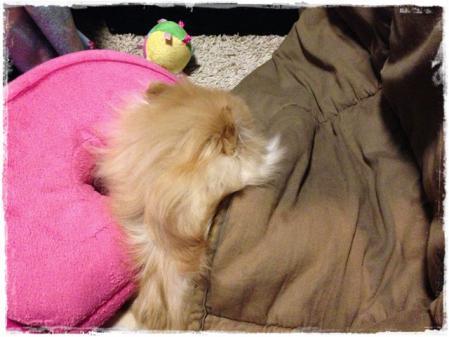 枕と掛け布団とカンタ
