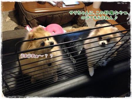 寝ぼけサリー参戦!!