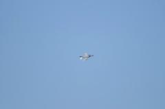 Hyakuri AB_F-4EJ_219