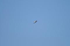 Hyakuri AB_F-4EJ_220