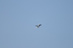 Hyakuri AB_F-4EJ_226